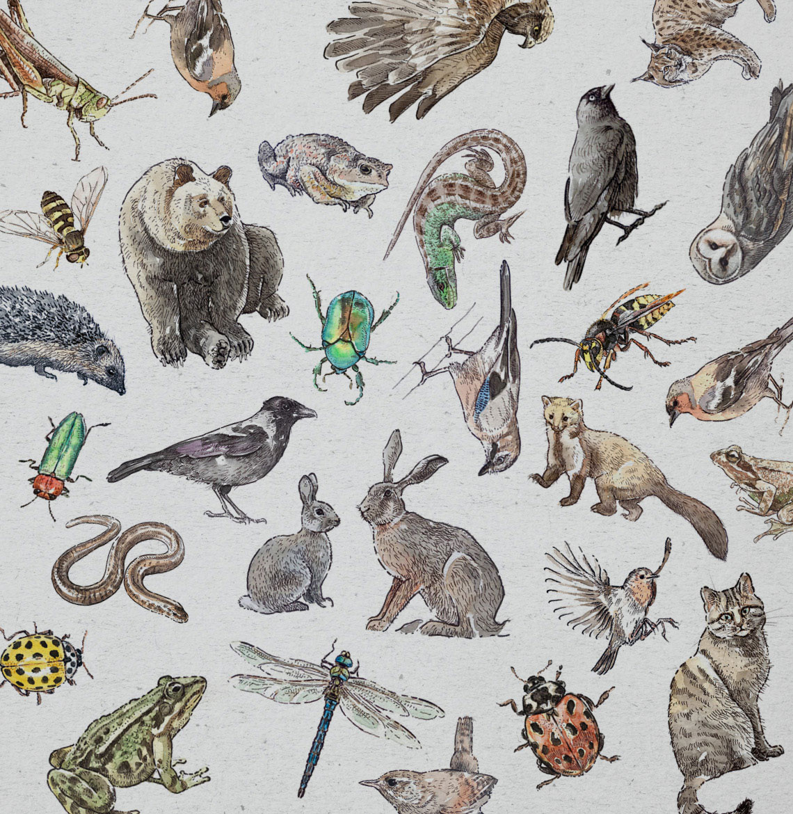 watercolor illustration of animals and nature